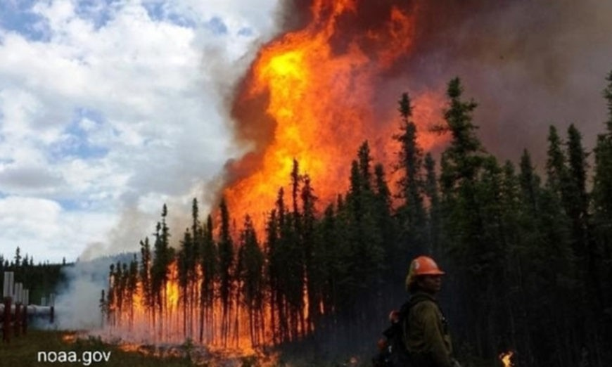 incendi artico