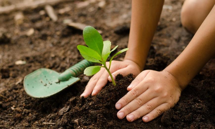 Studenti piantano alberi