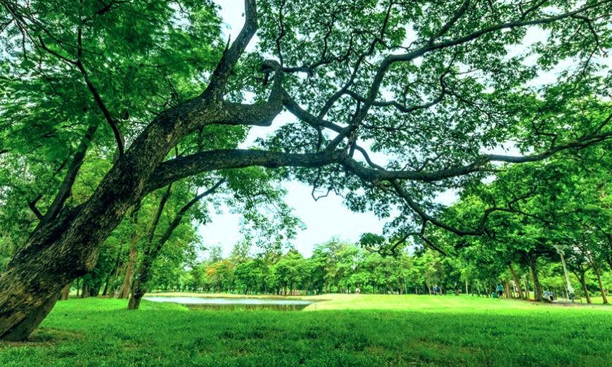 alberi, bosco