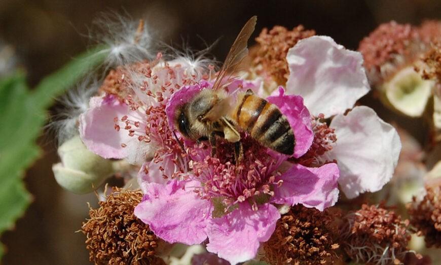 api e IAPV