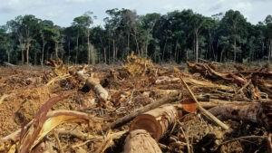 natura, distruzione degli habitat