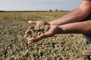 Perdita di biodiversità - siccità
