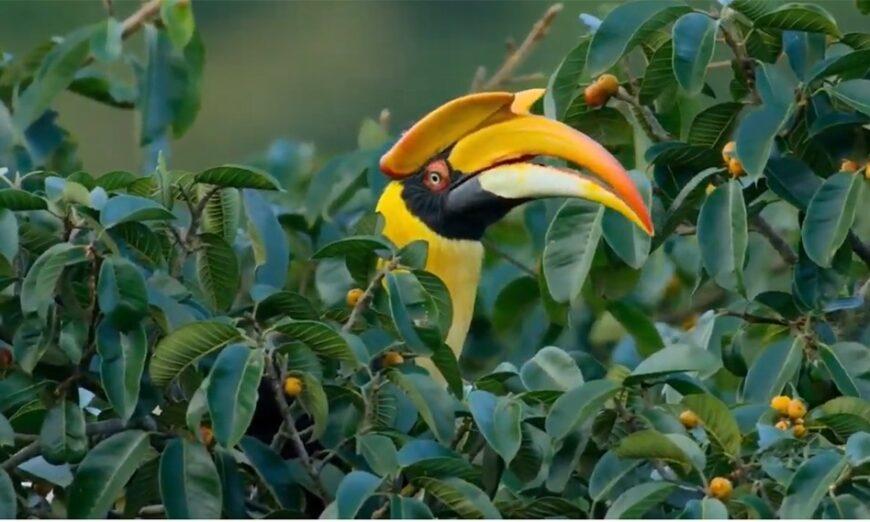 Impegno dei Leader per la Natura - biodiversità