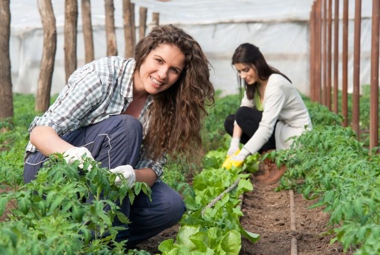 donne agricole